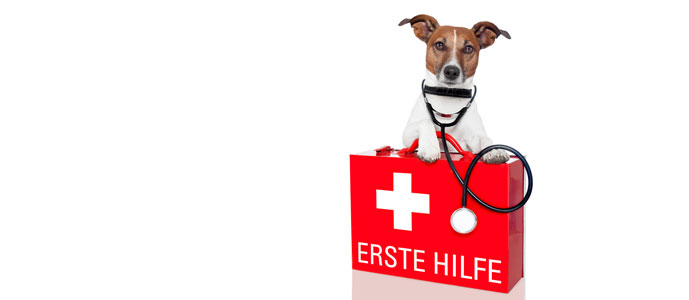 erstehilfe hunde